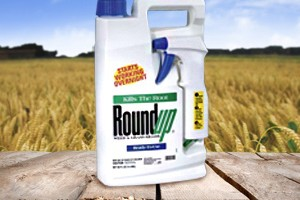 Glyphosate found to accumulate in animals and humans, leading to chronic illness