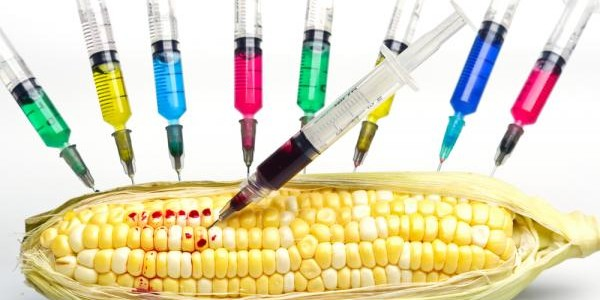 The Top 9 GMO Foods to Avoid