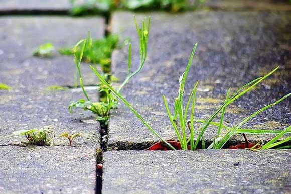 weed-killers-nontoxic
