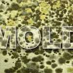 How Mold Sickness Destroys Your Health (And How to Protect Yourself)