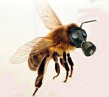 bees-neonicotinoids