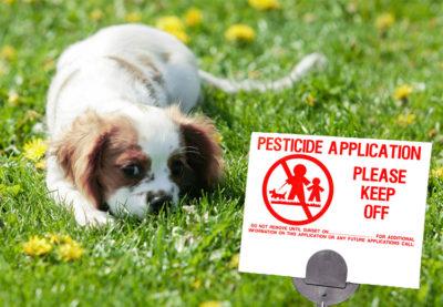 pets-lawn-pesticides