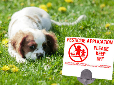 Are Pesticides Harming Your Pets?