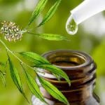 6 Essential Health Uses for Tea Tree Oil